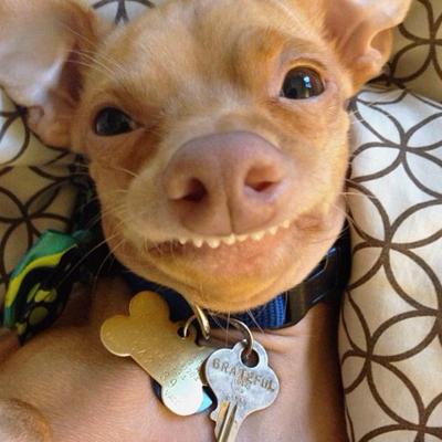 Puppy Grinning Dog Cat Selfie
