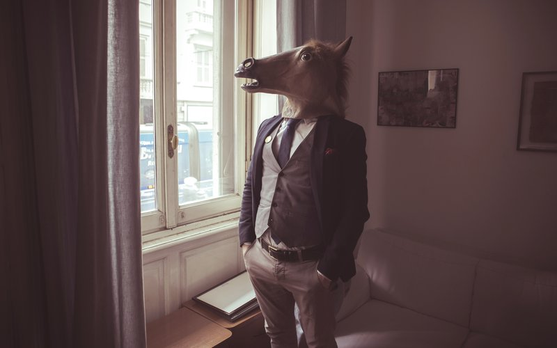 Horse by the window