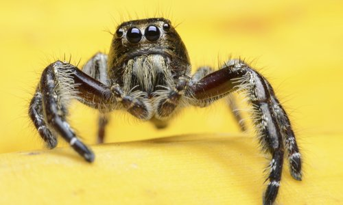 HUGE spiders to invade homes for autumn mating season